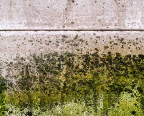 Mold Wall
